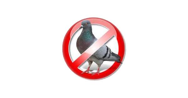 Allontanare-piccioni-fb