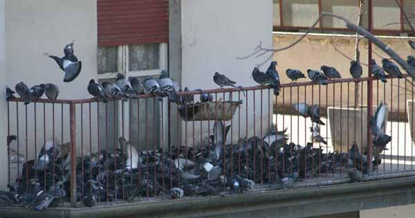 Piccioni-balcone