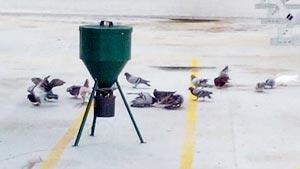Sterilizzazione-piccioni